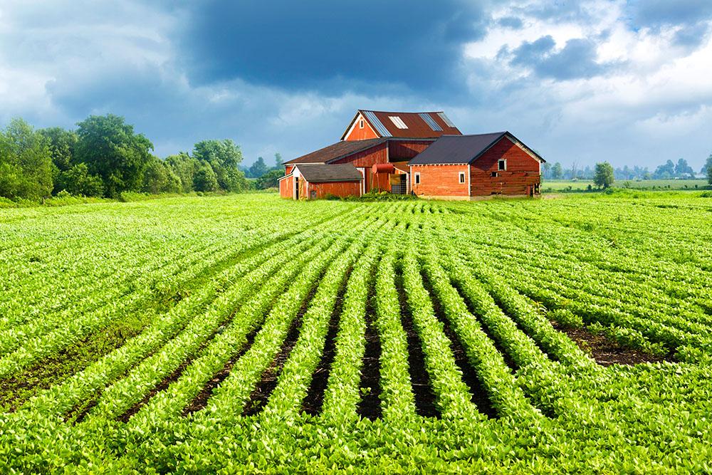 земельное хозяйство